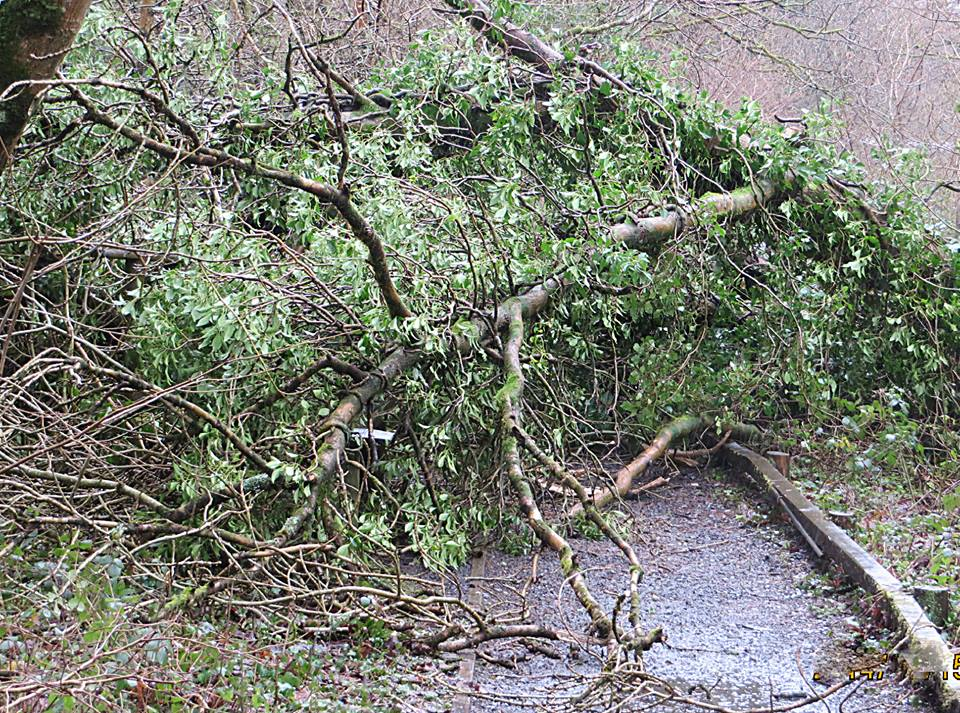 tree down stock image